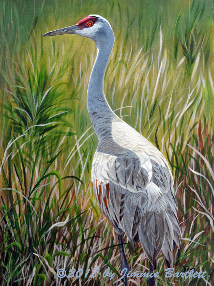 New Painting Finished, Sandhill Crane